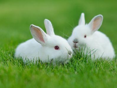 Knabberzeug für Kaninchen - nicht nur lecker, sondern auch gesund.