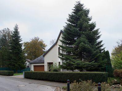 Dieser Baum aus Steinsel kommt auf den Bahnhofsvorplatz.