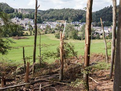 26.7. Sturmschaeden im Wald / Kahlschlag nach Unwetter / Waldarbeiten nach Sturm / Simmern und Umgebung Foto: Guy Jallay