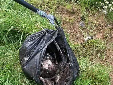 The bodies of ducks found in a bin bag in Luxembourg