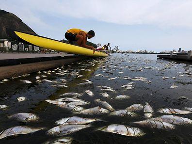 Die Behörden haben starke Regenfälle als Grund für das hohe Fischsterben auf der Ruderstrecke genannt.