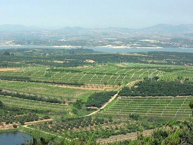 Un vignoble chinois près de la péninsule de Penglai dans l'Est du pays (province de Shandong).