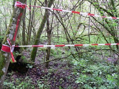 Rund um die Deponie sind junge Bäume gewachsen. Das Umweltministerium will verhindern, dass die Natur durch die Arbeiten zur Abtragung des belasteten Erdreichs beeinträchtigt wird.