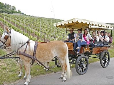 """Wine, Taste, Enjoy"" an der Luxemburger Mosel"