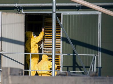 Experts wearing protection suits examine trays used to transport chicks at a poultry farm, where a highly contagious strain of bird flu was found by Dutch authorities, in Hekendorp November 17, 2014.