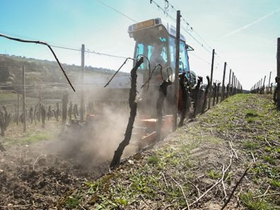 Weinbergbegruenung,Domaine Duhr & Freres. Ahn,Weinbau.Reben. Foto:Gerry Huberty