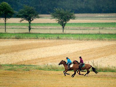 Im Galopp durch die Felder: Pferd und Reiter sollten ein eingespieltes Team sein, damit es nicht zu Unfällen kommt.