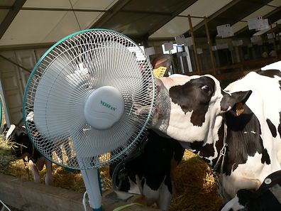 Der Ventilator: Auch bei den Tieren höchst beliebt.