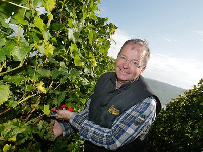 Winzer Norbert Schill aus Machtum ist sehr zufrieden mit der Quantität und der Qualität der Trauben.