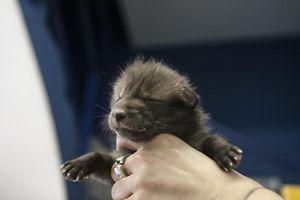 Der kleine Fuchs Rafi hat in Düdelingen ein provisorisches Zuhause gefunden.