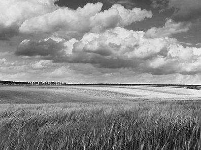 Champs de blé mur près de Dalheim, Luxembourg, 1974