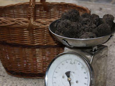 Welche Preis die Trüffel erzielen, entscheidet sich jede Woche neu auf dem Trüffelmarkt in Carpentras. Wenn die Saison schlecht war, steigen die Preise wegen des knappenAngebots auf bis zu 1000 Euro pro Kilo.
