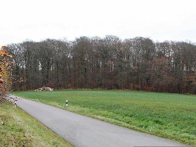 Der Staat hat vor mehr als zehn Jahren einzelne Parzellen mit einer Gesamtfläche von sechs Hektar nahe Ernster erworben.