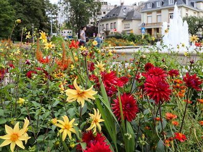 """Auch für die bunte Blütenpracht beim Amaliendenkmal ist der """"Service des Parcs"""" zuständig."""