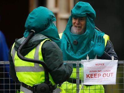 Nachdem auf einer Entenfarm in Nafferton in Nordengland die Vogelgrippe entdeckt worden ist, töteten Mitarbeiter der Umwelt-Behörde Defra am 18. November 6000 Enten, um eine weitere Ausbreitung des Virus' zu verhindern.