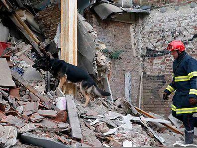 Ein Feuerwehrmann mit seinem Hund suchen in den Trümmern nach Überlebenden.