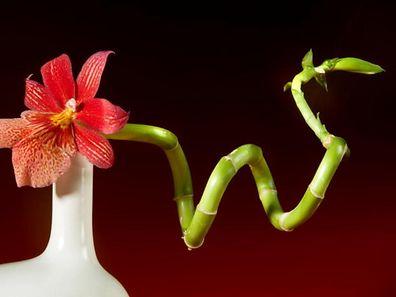Discover the art of Ikebana (Japanese flower arranging)