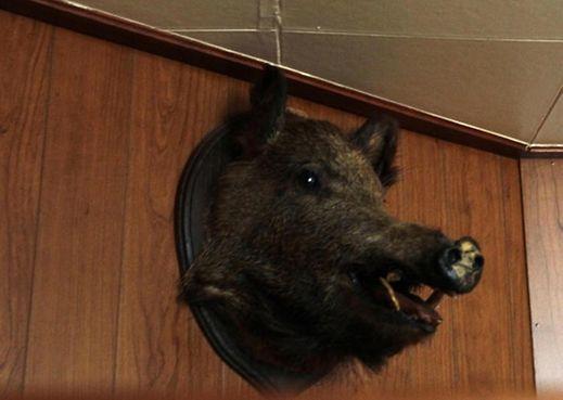 Das Wildschwein wacht über die Gäste.