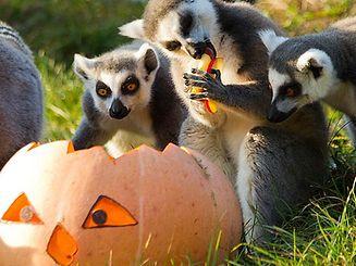Le parc de Sainte-Croix célèbre Halloween avec de nombreuses animations!