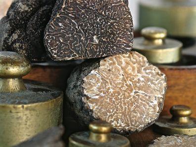 Die schwarze Winteredeltrüffel Tuber melanosporum ist auch als Périgord-Trüffel bekannt. Sie gibt es auch in Albinoform (unten).