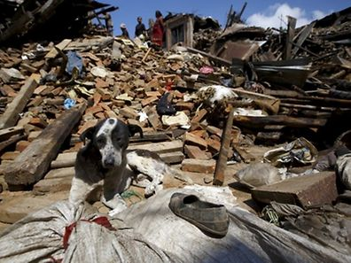 A dog sits in front of a mound of rubble of collapsed houses after Saturday's earthquake in Bhaktapur, Nepal April 27, 2015. REUTERS/Navesh Chitrakar