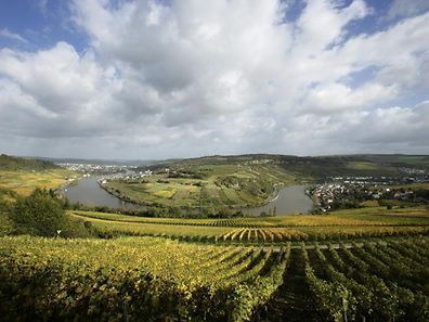 A view over vines in the Luxembourg Moselle wine region