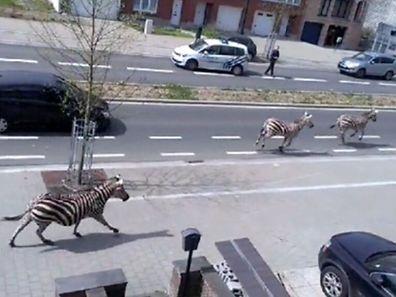 Nichts Besonderes zu sehen. Nur ein paar Zebras auf der Straße...