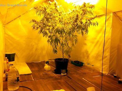 Der Anbau von Cannabispflanzen wird mit einer ein- bis fünfjährigen Gefängnisstrafe und/oder einer Geldstrafe zwischen 500 und 1.250 000 Euro bestraft.