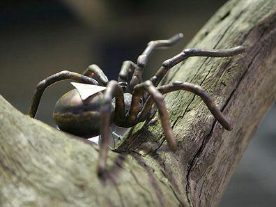 Die scheinbar echt große Spinne sorgte für nächtliche Aufregung in Sydney.
