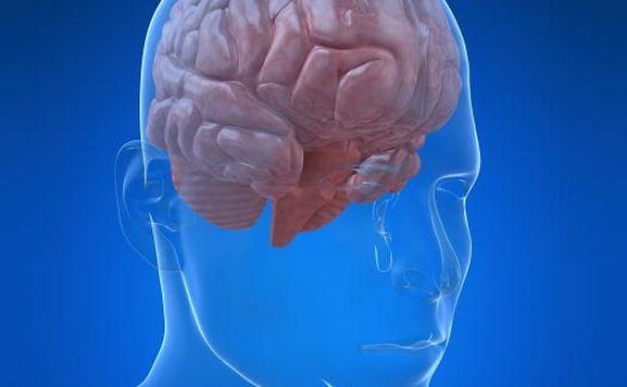 """""""Damit ist uns erstmals der Nachweis eines körpereigenen Antibiotikums im Gehirn gelungen"""", berichtete Dr. Karsten Hiller vom LCSB."""