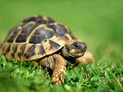 Schildkröten verstehen scheinbar die Not ihrer Artgenossen.