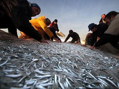 Em 2010 o quilo de sardinha valia, em média, 0,64 euros. Este ano, o preço médio ascendeu aos 1,74 euros/quilo