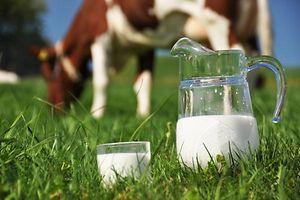 Milch Kuh Milchpreis Milchproduktion