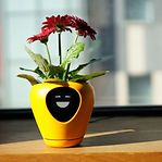 Empresa luxemburguesa cria vaso interativo que comunica necessidades das plantas