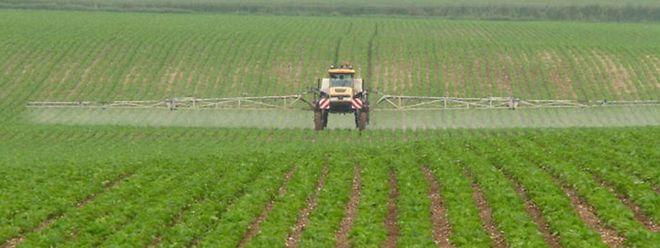 Mit dem nationalen Aktionsplan Pestizide soll der Einsatz der Pflanzenschutzmittel gebremst werden.