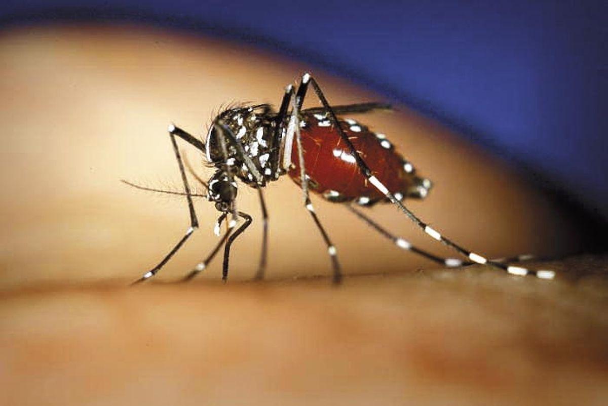 Auch eine Folge des Klimawandels: Die Tigermücke, Überträgerin von mehreren Krankheiten, breitet sich in den wärmeren Gegenden Europas aus.