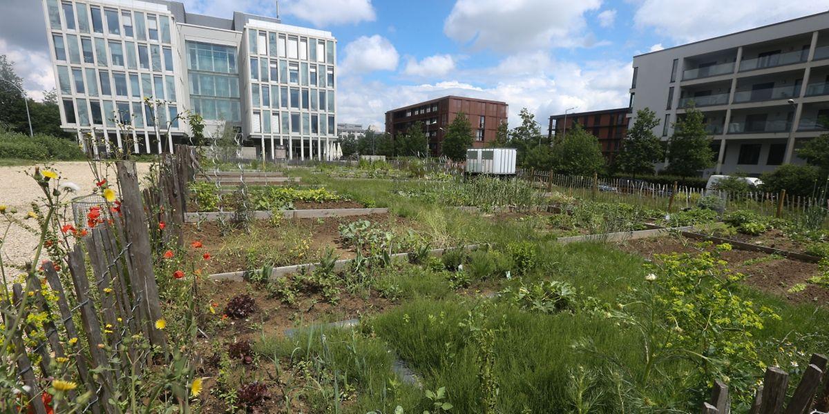 Grünflächen, wie hier die Gemeinschaftsgärten im Viertel Grünewald, werden von den Bewohnern sämtlicher Stadtteile geschätzt oder gewünscht.
