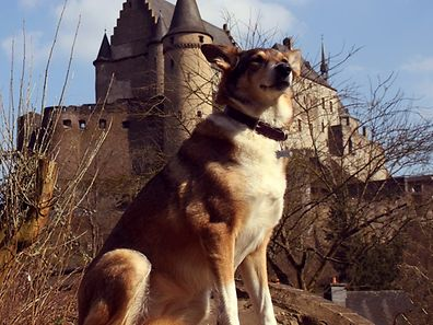 Top dog Dolly poses outside Vianden Castle