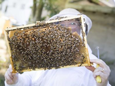 Beekeeper Amanda Surbey shows off a honeycomb layer from one of her hives