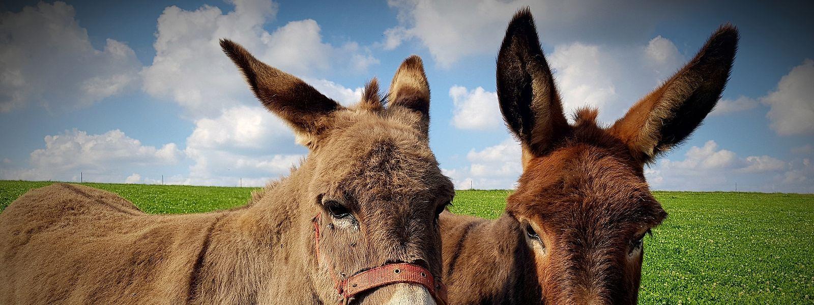 Vermehrte Fälle von Tierquälerei haben die Politik zum Handeln veranlasst.