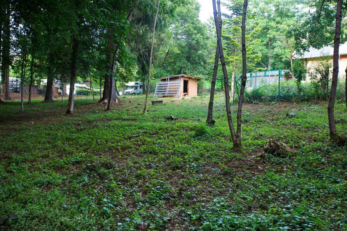 Auf einem Gelände zwischen Camping und Tierpark sollen fünf Baumhäuser errichtet werden.