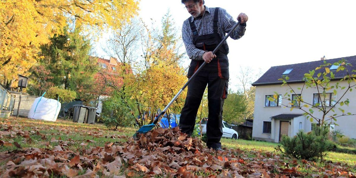 In Gärten mit großen Bäumen kann viel Herbstlaub anfallen. Wohin damit?
