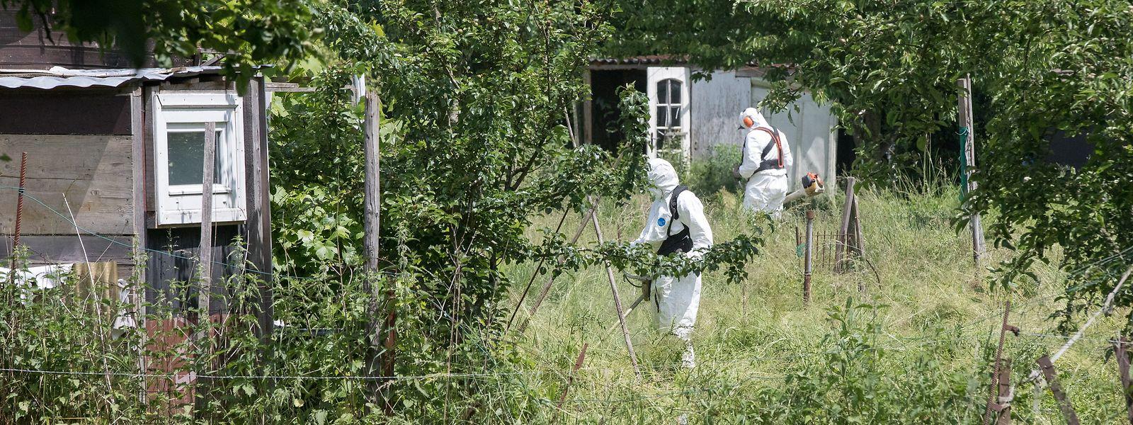 Am 30. Mai 2018 wird in einem verlassenen Schrebergarten ein Mordopfer entdeckt.