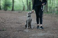 Illustration, Leine, Hunde, Hunde an die Leine bitte, Leinenzwang, Foto: Luxemburger Wort/Anouk Antony