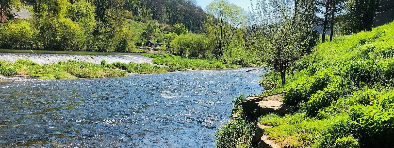 La Sûre, en amont du barrage d'Esch-sur-Sûre, est le cours d'eau le plus vulnérable du pays.