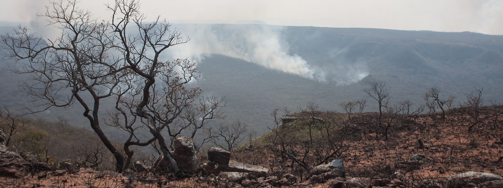 Damit nicht noch mehr Natur im Amazonasgebiet verbrennt, soll nun das Militär in den betroffenen Gebieten beim Löschen der Flammen helfen.