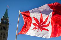 (FILES) In this file photo taken on April 20, 2016 A woman waves a flag with a marijuana leef on it next to a group gathered to celebrate National Marijuana Day on Parliament Hill in Ottawa, Canada. - Nearly a century of marijuana prohibition came to an end Wednesday, October 17, 2018, as Canada became the first major Western nation to legalize and regulate its sale and recreational use. The change was praised by pot enthusiasts and investors in a budding industry that has seen pot stocks soar on the Toronto and New York stock exchanges, but sharply questioned by some health professionals and opposition politicians. (Photo by Chris Roussakis / AFP) / ALTERNATIVE CROP