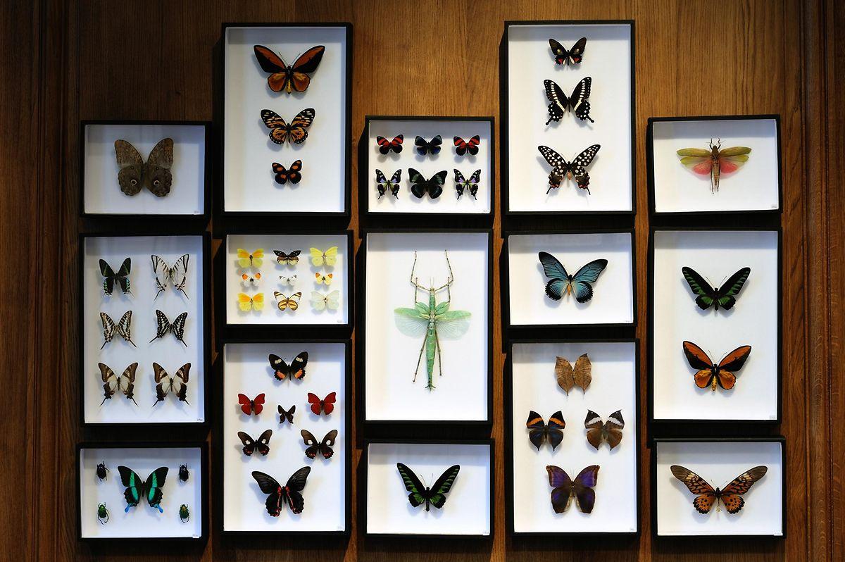 Die Insekten, die es bei Deyrolle zu sehen - und käuflich zu erwerben - gibt, stammen zum Großteil von Zuchtfarmen.