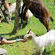 Die Kinder hatten viel Spaß beim Füttern der Tiere.
