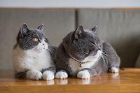 Die Regierung peilt unter anderem ein Verbot von Mikrochips bei Katzen an.